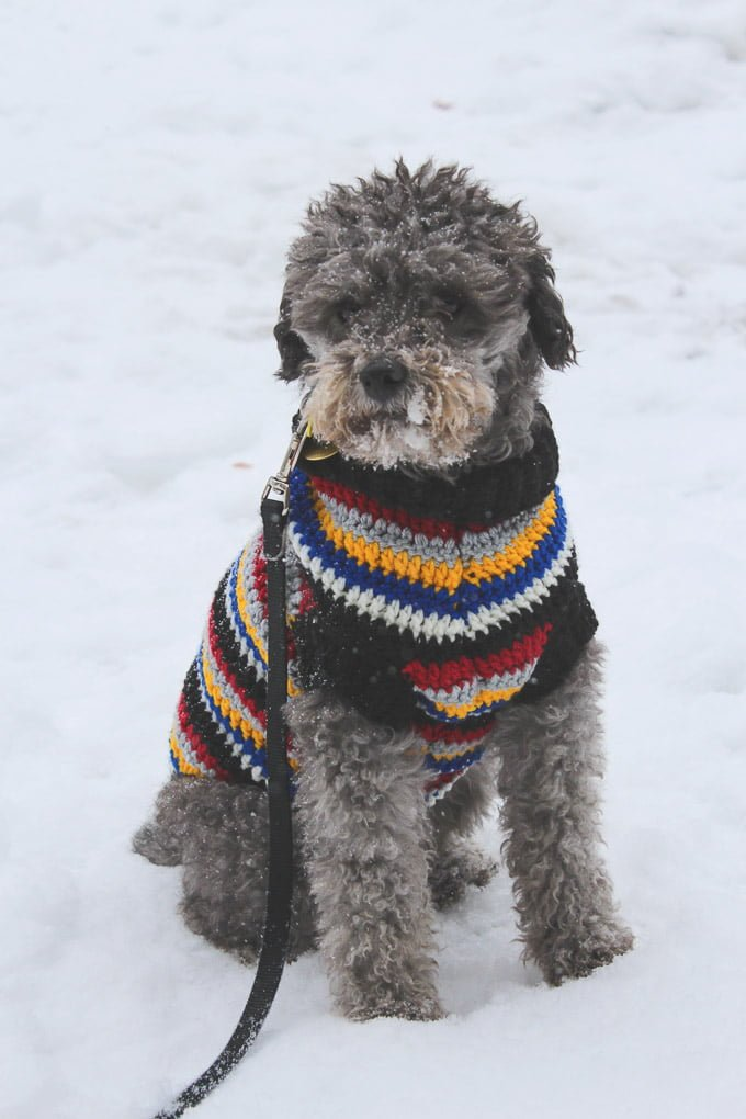 Toby sitting in snow wearing a multicolored sweater.