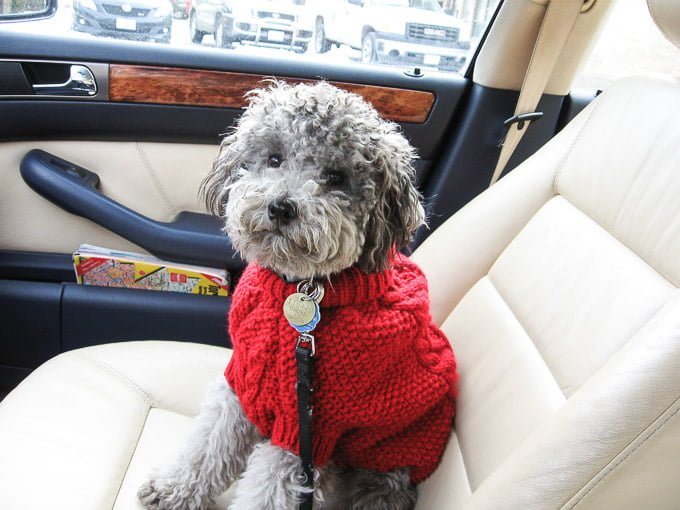 Toby wearing a red sweater sitting on the passenger sit in a car.
