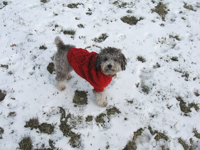Toby standing on snow wearing a red sweater.